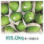 フィリピン産青パパイヤ(野菜パパイヤ)約5.0kg 8〜12個入り