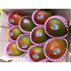 ペルー産アップルマンゴー 約5.5kg 12個・15個・16個入り(ケント種)