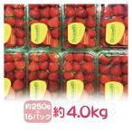 アメリカ産ストロベリー(いちご・苺)約4.0kg 15粒×約250g(16パック)
