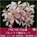 Yahoo!Tropical Village Market【Premium品種】プルメリア 'Dwarf Pink Singapore' ベアルート発根苗の栽培セット(スリット鉢・プルメリア専用培養土・栽培ガイドつき)
