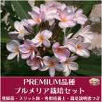 Yahoo!Tropical Village Market【Premium品種】プルメリア 'Fah Pra Tarn' ベアルート発根苗の栽培セット(スリット鉢・プルメリア専用培養土・栽培ガイドつき)