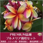 Yahoo!Tropical Village Market【Premium品種】プルメリア 'Maui Rainbow' ベアルート発根苗の栽培セット(スリット鉢・プルメリア専用培養土・栽培ガイドつき)