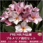 Yahoo!Tropical Village Market【Premium品種】プルメリア 'P26' ベアルート発根苗の栽培セット(スリット鉢・プルメリア専用培養土・栽培ガイドつき)