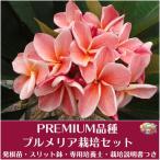 Yahoo!Tropical Village Market【Premium品種】プルメリア 'P61' ベアルート発根苗の栽培セット(スリット鉢・プルメリア専用培養土・栽培ガイドつき)