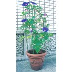 第一ビニール のびーる支柱 花のドーム 植木鉢用