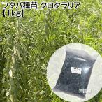 緑肥 種 クロタラリア 1kg マメ科 線虫抑制 フタバ種苗