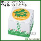 ラッシュ Euvo Design Potted Plant ワイルドストロベリー PP10191