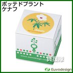 ラッシュ Euvo Design Potted Plant ケナフ PP10192