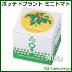 ラッシュ Euvo Design Potted Plant ミニトマト PP10193