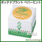 ラッシュ Euvo Design Potted Plant ペパーミント PP10195