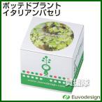 ラッシュ Euvo Design Potted Plant イタリアンパセリ PP10867