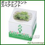 ラッシュ Euvo Design Potted Plant スペアミント PP10868