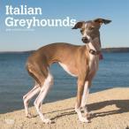 2019年カレンダー/輸入/イタリアングレイハウンド/犬 /ドッグ/月めくり/壁掛けタイプ