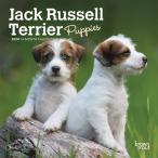 ジャックラッセルテリア パピー 2020年  ミニタイプ カレンダー  犬 DOG  月めくり 壁掛け