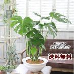 観葉植物 おしゃれ 室内 人気 誕生日 プレゼント