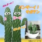 Yahoo!フラワーポケット 塚口ガーデンバンザイ サボテン モダンスタイルB-4 バンザイキット付  観葉植物 インテリア