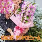赤字覚悟 人気の春色 デンドロビューム蘭を特別販売 ピンクのデンドロビュームラン鉢花