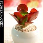 観葉植物 多肉植物 砂漠に咲くバラ?デザートローズ