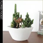 Yahoo!フラワーポケット 塚口ガーデンモダンスタイルサボテン F-2 ジオラマサボテンシリーズ 恐竜&アニマル 多肉植物 観葉植物