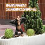 観葉植物 人気 誕生日 プレゼント インテリア ジオラマ サボテン F-20