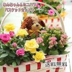ショッピングバラ 花 ギフト 誕生日 プレゼント  鉢花  送料無料 ミニバラとわんちゃんトピアリーバスケットセット