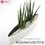 Yahoo!フラワーポケット 塚口ガーデンサンスベリア 観葉植物 インテリア モダン サボテン スタイルGD-4  ミカド