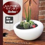 観葉植物 インテリア モダン サボテン スタイルGD-6 サンスベリア・スタッキー