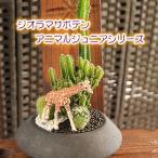 観葉植物 インテリア F-12 ジオラマサボテンシリーズ アニマルジュニア