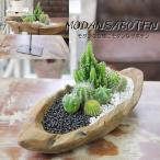 Yahoo!フラワーポケット 塚口ガーデン天然木を使用したアジアンナチュラルデザインの モダンスタイル サボテン F-32(電磁波吸収サボテン セレウスペルヴィアナス) 観葉植物