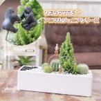 Yahoo!フラワーポケット 塚口ガーデンモダンスタイル  ジオラマ サボテン F-36 観葉植物 人気 誕生日 プレゼント インテリア