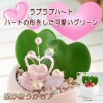 誕生日プレゼント 観葉植物 インテリア カップル ハートホヤ ベラ