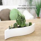 Yahoo!フラワーポケット 塚口ガーデンモダンスタイル サボテン モダン サボテン ウエイブ(波型器)観葉植物 インテリア