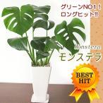 観葉植物 おしゃれ 室内 人気あすつく対応南国アジアン