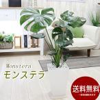 観葉植物 おしゃれ 室内 人気 急上昇 あすつく対応