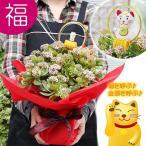 送料無料 招き猫で迎福 縁起良い金運植物 花が咲いてる大株サイズ 金のなる木 成金草 又は 華やか季節のシクラメン