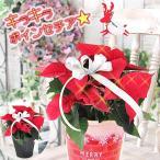 ポインセチア 選べる鉢カバー 光るポインセチアに変更可能  クリスマス ギフト