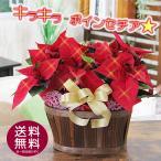 ポインセチア クリスマス ギフト   送料無料 選べるカゴセット 2鉢入り 光るポインセチアに変更可能