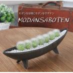 観葉植物 インテリア モダン サボテン A-1(横長舟形)