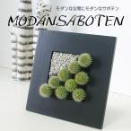 観葉植物 インテリア モダン サボテン A-3 黒額小
