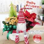 キラキラ光る ラメ付きポインセチアに無料変更可能 送料無料 おひげのサンタさん クリスマスツリー ポインセチア バスケット寄せ鉢花  鉢植え