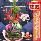 お正月飾り お年賀  お歳暮 迎春 手作り 苔玉 Mサイズ