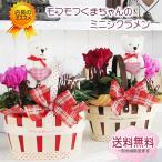 花 ギフト プレゼント 送料無料 モフモフ クマちゃんトピアリーバスケット シクラメン鉢花寄せカゴセット