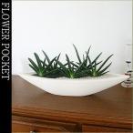 多肉植物 ギフト 観葉植物 ガステリアグリーンワイパー モダンスタイルC-2(船形サイズ大)
