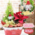 キラキラ光る!ラメ付きポインセチアに無料変更可能 送料無料 クリスマスツリー ポインセチア 赤いBOXに寄せ鉢花セット 鉢植え