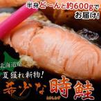 新物時鮭半身 約600g ※冷凍 【冷凍同梱可能】 ☆