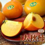 柿子 - 柿 送料無料 熊本県産「太秋柿」産地箱 秀品 8〜14玉 約3.5kg