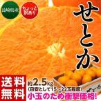みかん 柑橘 長崎産 せとか バラ詰 約2.5kg(目安として15〜22玉)送料無料  frt ☆