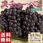 《送料無料》青森県産 黒ぶどう「スチューベン」5〜9房 約1.5kg  【同梱不可】○