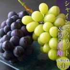 ぶどう 葡萄 ブドウ 長野県産「シャインマスカット1房&巨峰1房」合計約750g送料無料