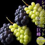 ぶどう 葡萄 ブドウ 長野県産「シャインマスカット2房&巨峰2房」合計4房約1.5kg 送料無料